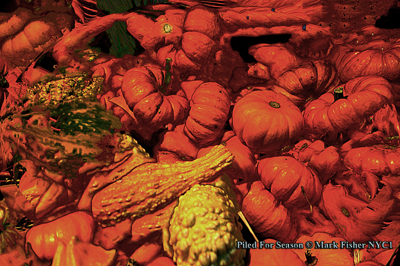 Piled For Season © Mark Fisher NYC1-0043