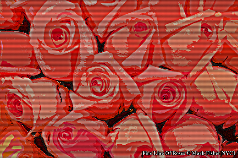 Fine Line Of Roses © Mark Fisher NYC1-0005