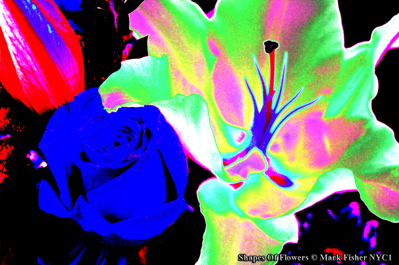 Shapes Of Flowers © Mark Fisher NYC1-0056